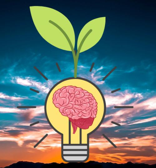 Bright ideas that grow